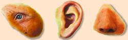 Ear Prosthesis