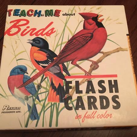 Teach Me About Birds...