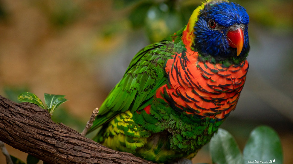 Colorful bird wall art and home decor Timeless Moments by Presha and TM Photography