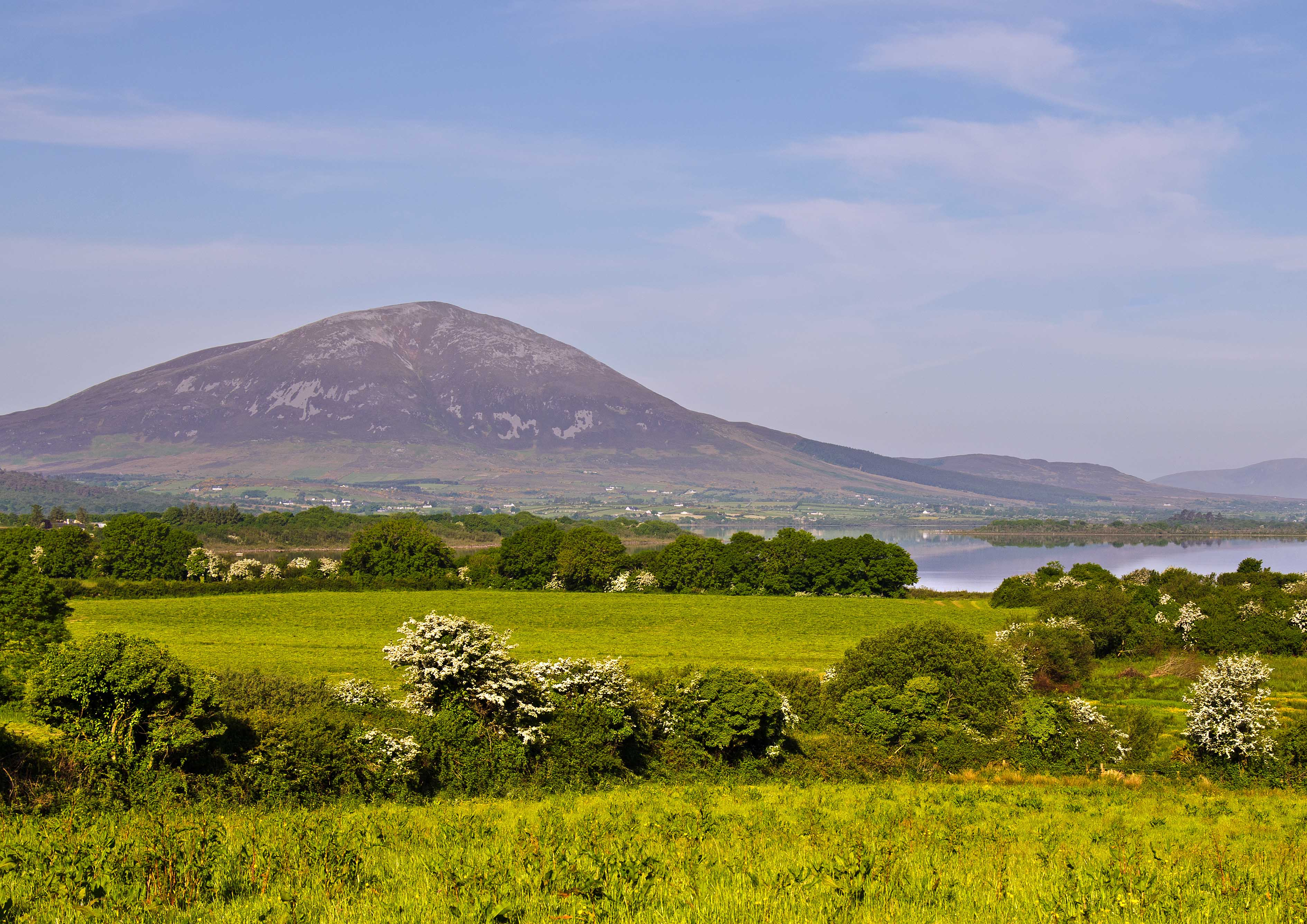 Nephin Hawthorns, Co.Mayo
