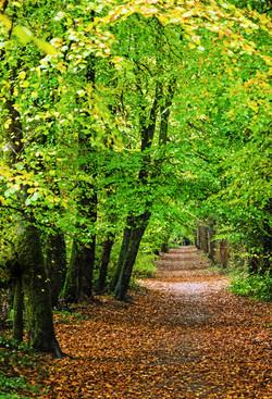 Belleek Wood