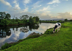 Foxford Moy Corrigeen Pool, Co. Mayo