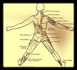 Le fascia myotensif