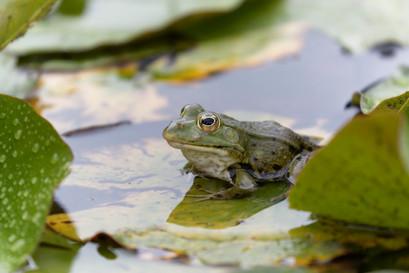 Sei (k)ein Frosch