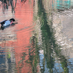 Quack artist