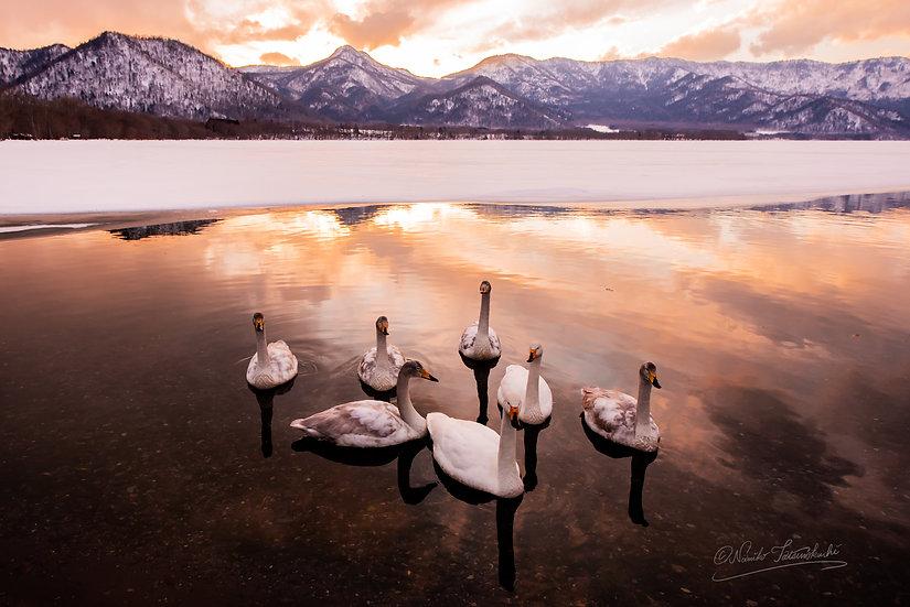 Swan Lake_007