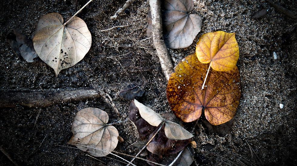 Leaves in Hawaii