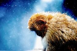 Cosmic Monkey