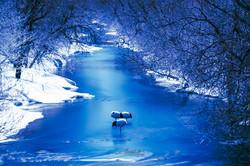 2016-1-24_Secret_Sleeping Crane_W-0116