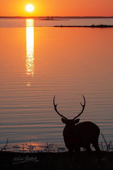 Sunset behind Deer_003