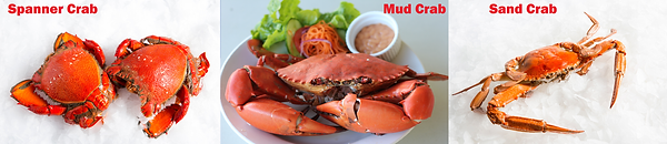 3 types of crab.png