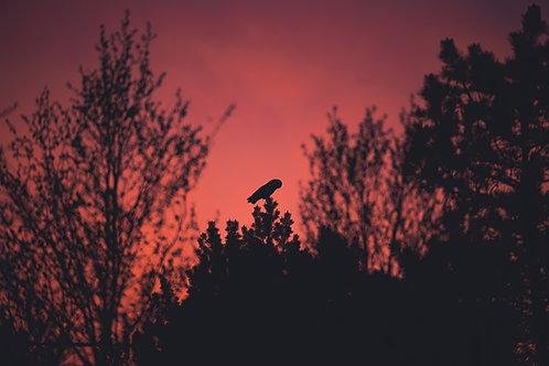 Jordugle i soloppgang - Veggfoto