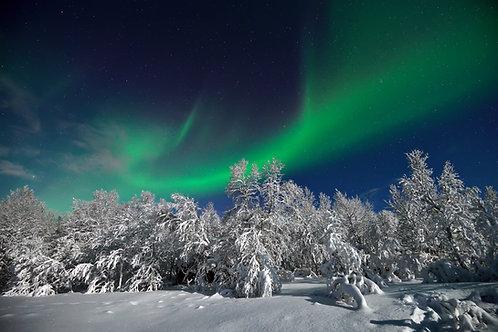 Nordlys over snøtunge trer - Veggfoto