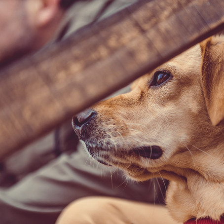 Pet-Friendly Cabin Rentals in Black Mountain, North Carolina