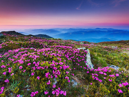 Tips for America's Favorite Scenic Drive: The Blue Ridge Parkway
