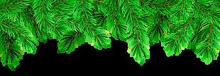christmas-pine-png-7 м.png