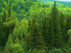 Природа, растения и животные Тюменской области. Часть 1