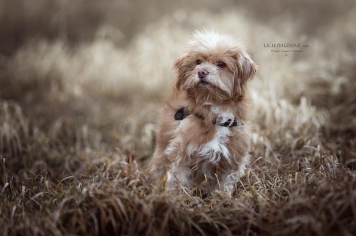 Lichtbilderei | Hund