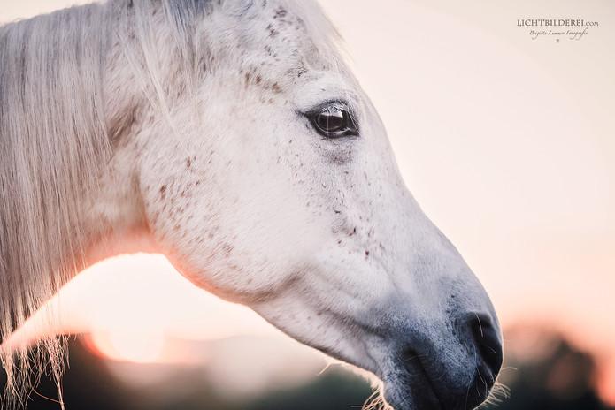 Lichtbilderei Pferd