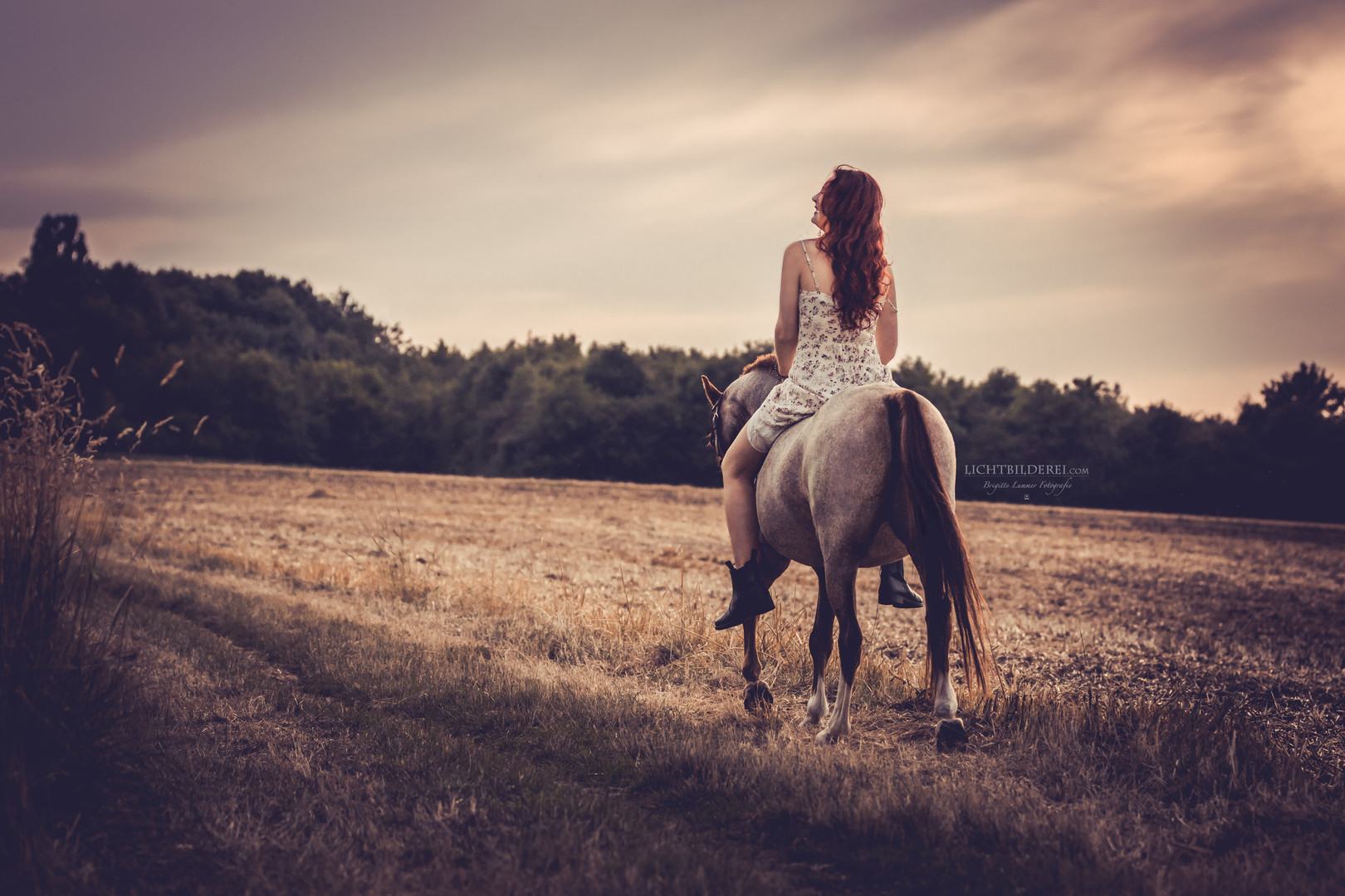 Lichtbilderei Partner Pferd