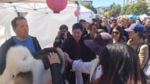 San Francisco Cherry Blossom Festival 2017