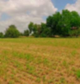 imagen de campo con hierba