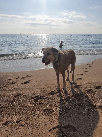 Ava on beach.jpg