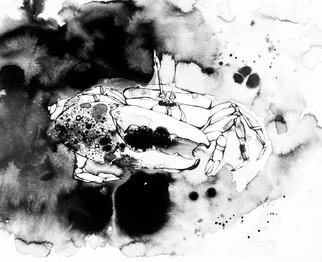 illustration-croquis-crabe