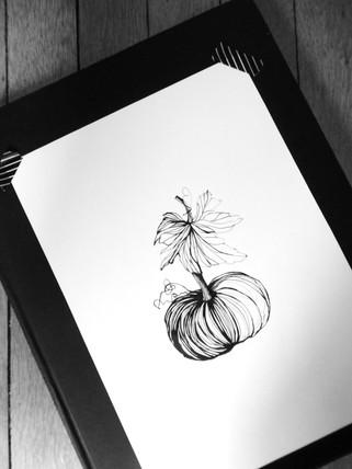 illustration-citrouille
