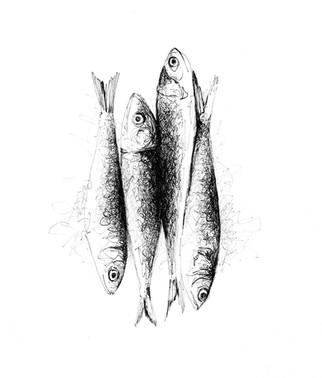 illustration-sardines