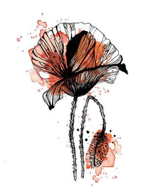 illustration-fleur-coquelicot