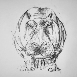 illustration-hippopotame