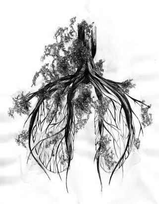 illustration-végétation-anatomie