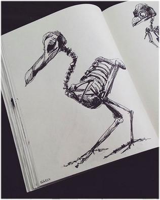 illustration-bird