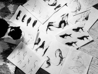 illustration-croquis-baleine