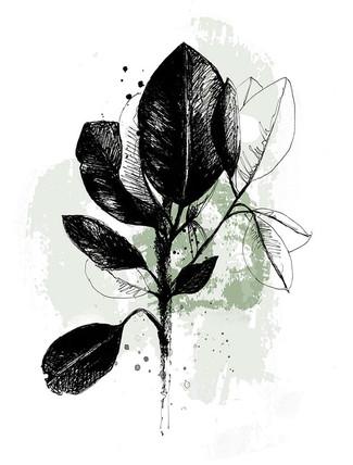 illustration-plantes-vertes