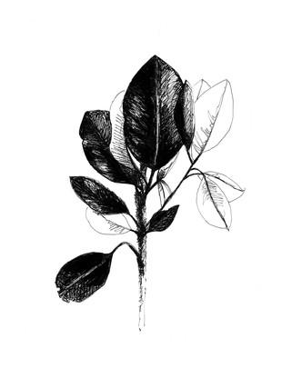 illustration-plantes-feuilles
