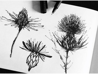 illustration-croquis-plantes-chardons