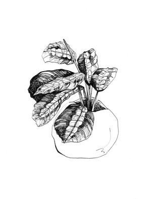 illustration-plantes