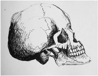 illustration-câne