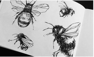 illustration-croquis-abeilles