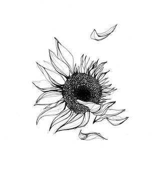illustration-tournesol