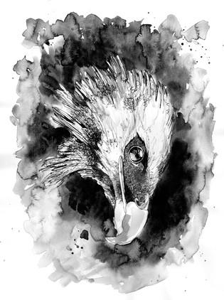 croquis-aigle