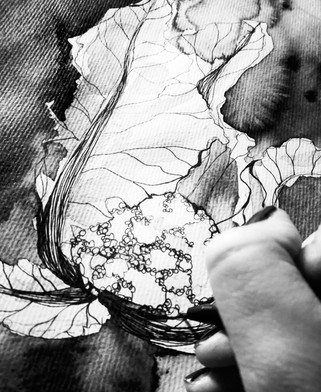 illustration-chou-aquarelle-detail