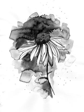 illustration-tournesol-watercolor