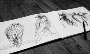illustration-croquis-oiseaux