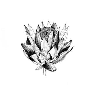 illustration-croquis-fleur