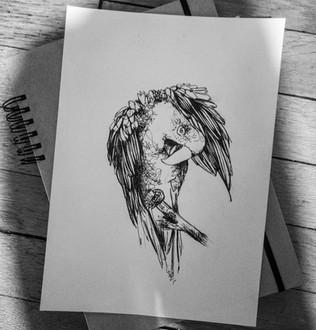 illustration-perroquet