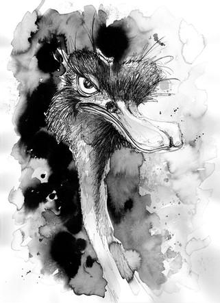 illustration-autruche