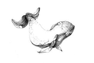 illustration-baleine-croquis